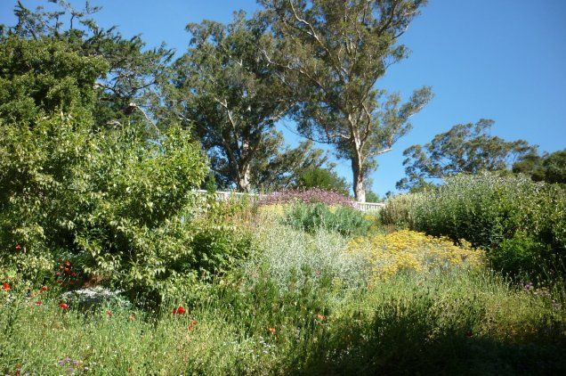 The Mediterranean garden at the Dunedin Botanic Gardens - most of the herbs and shrubs are edible, and the scent on a sunny day is intoxicating!