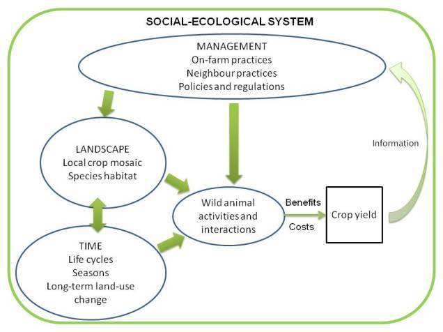 agroecology blog fig