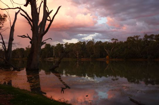 Murray River at Euston, NSW.